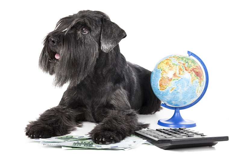 "Stop Doing Business Like It Is A ""Dog Eat Dog"" World"